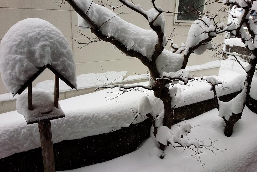 雪かき三昧