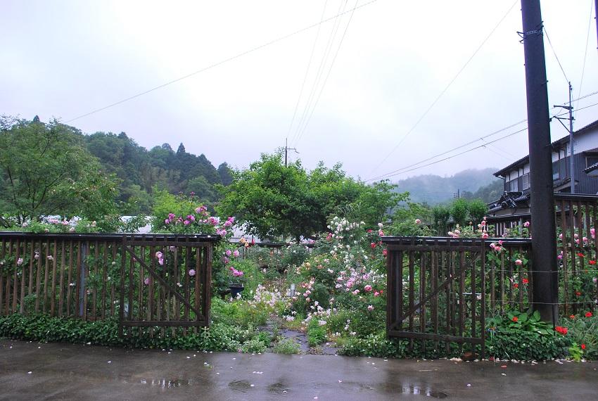 8年越しの薔薇園