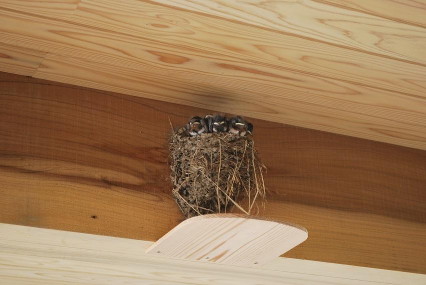 成長著しい!…巣、増築?