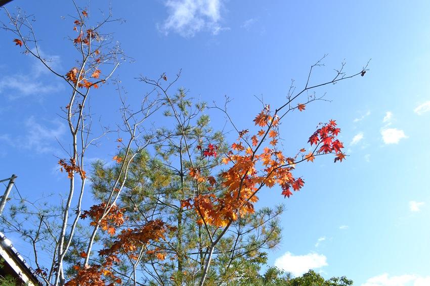 家から眺める紅葉