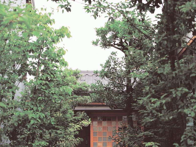 雑木林をくぐりぬける家